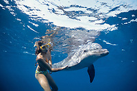 Dolphin Trainer Swimming with Bottlenose Dolphin, Tursiops truncatus, Dolphin Reef, Eilat, Israel, Red Sea.