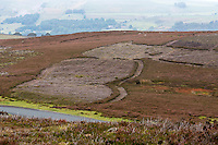 UK, England, Yorkshire.  September Heather in the Yorkshire Dales.  Controlled Burning to stimulate new growth for grouse.