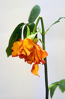 Piante e fiori.Plants and flowers...