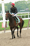 """Boisterous with Alan Garcia aboard win the Grade III Fort Marcy for 3-year olds & up, 1 1/16 mile on the Widener turf, at Belmont Park. Trainer Claude """"Shug"""" McGaughey.  Owner Phipps Stable."""