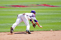 Eric Stamets (8) of the Evansville Purple Aces dives for a line drive to short during a game against the Indiana State Sycamores in the 2012 Missouri Valley Conference Championship Tournament at Hammons Field on May 23, 2012 in Springfield, Missouri. (David Welker/Four Seam Images)