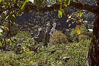 Europe/France/Auvergne/12/Aveyron/Conques: Vendanges et le Château d'Humières (XVIème) (<br /> PHOTO D'ARCHIVES // ARCHIVAL IMAGES<br /> FRANCE 1980