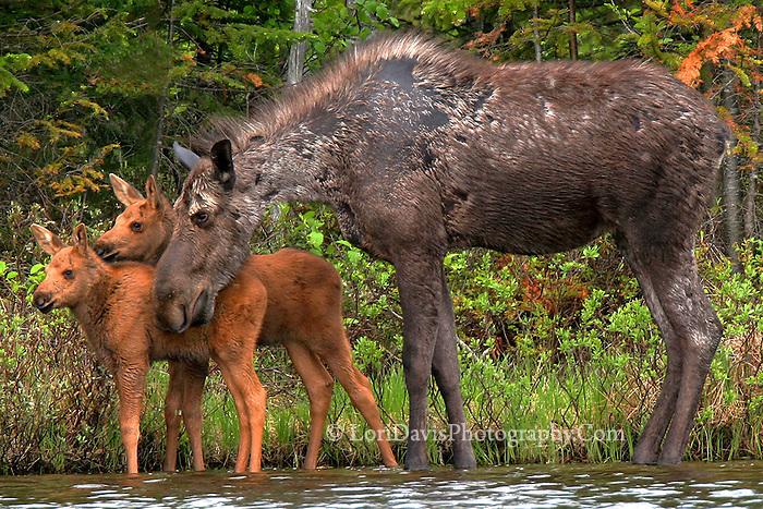 """""""Moose Hug""""  #M27"""