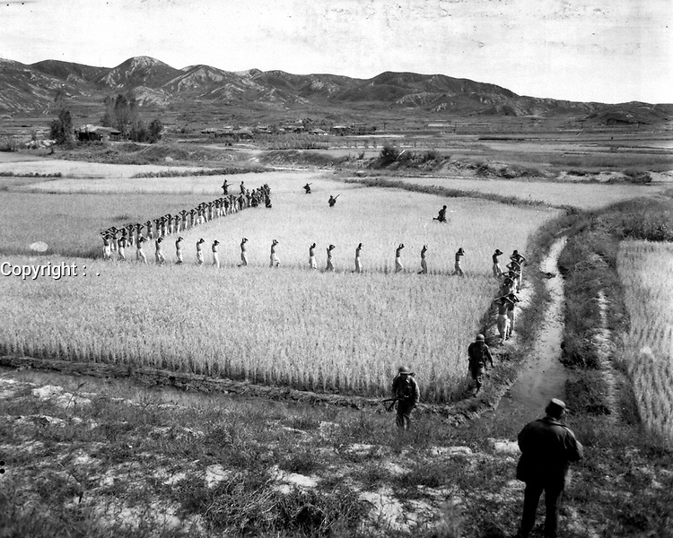 North Korean prisoners, taken by the Marines in a foothills fight, march single file across a rice paddy.  1950  (Marine Corps)<br /> Exact Date Shot Unknown<br /> NARA FILE #:  127-N-A3242<br /> WAR & CONFLICT BOOK #:  1489