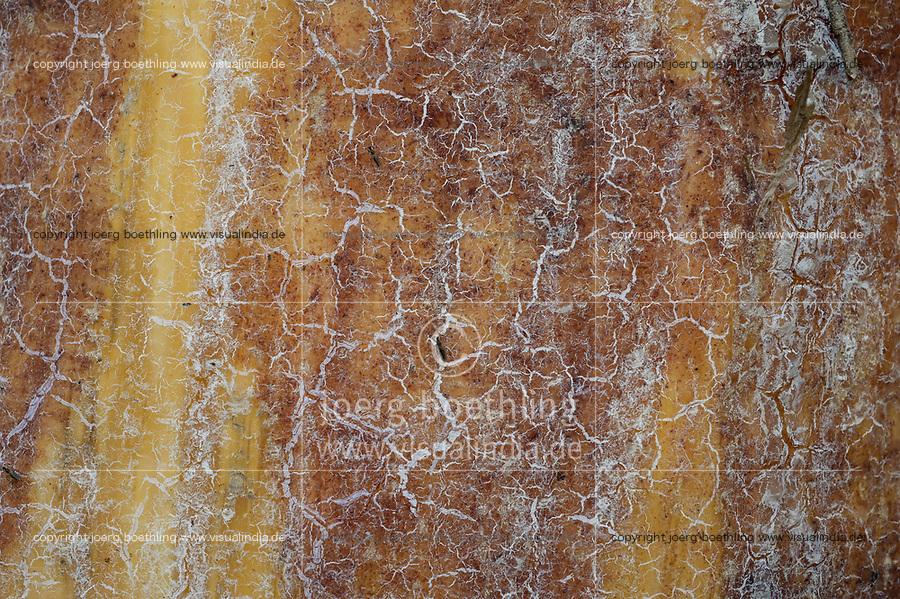 GERMANY, lower saxonia, Forest / DEUTSCHLAND, Niedersachsen, Lüneburger Heide, Wald und Moor, Ottermoor, Rindenbeschädigung bei einer Kiefer