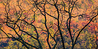 Cades Cove in the Great Smokey Mountains of Tennessee.  The colorful fall colors show through the limbs of a tree already bare of leaves.