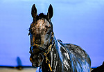 April 24, 2021: Essential Quality, the likely Kentucky Derby favorite, gets a bath after his workout on the track at Churchill Downs for trainer Brad Cox in Louisville, Kentucky. (Scott Serio/Eclipse Sportswire/CSM)