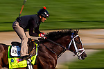 APRIL 29, 2015: Materiality, trained by Todd Pletcher, exercises in preparation for the 141st Kentucky Derby at Churchill Downs in Louisville, Kentucky. Jon Durr/ESW/Cal Sport Media