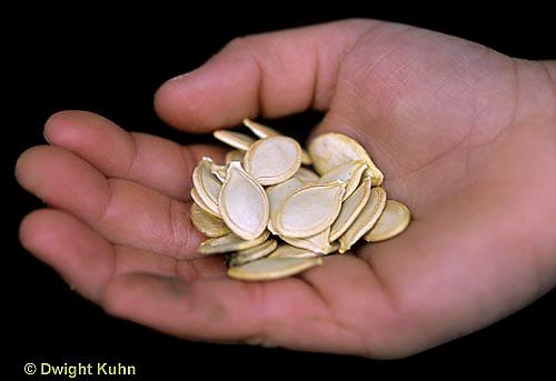 HS24-326z  Pumpkin - hand holding seeds