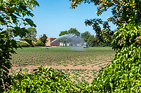 Irrigating potatoes with a rain gun - Lincolnshire, May
