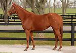 09 November  2009 Fasig TIpton November Breeding Stock sale.  Hip #90 GInger Punch, consigned by Adena Springs farm.  Multiple Graded Stakes Winner, Eclipse award winner.