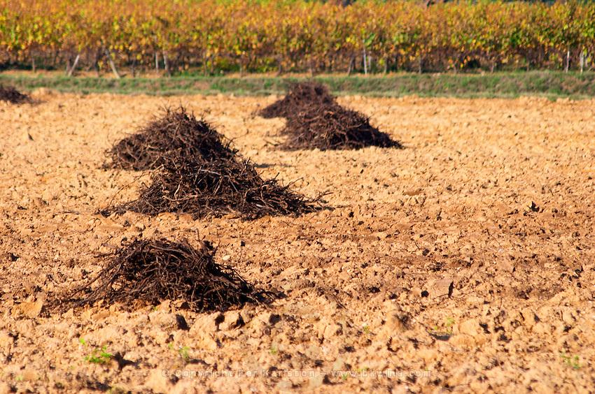 Chateau Mire l'Etang. La Clape. Languedoc. Vines grubbed up for replanting. France. Europe. Vineyard.