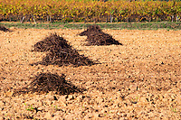 Chateau Mire l'Etang. La Clape. Languedoc. Vines grubbed up for replanting. France. Europe. Vineyard.