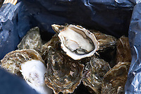 . Restaurant. Selling oysters to go takeaway. Bordeaux city, Aquitaine, Gironde, France