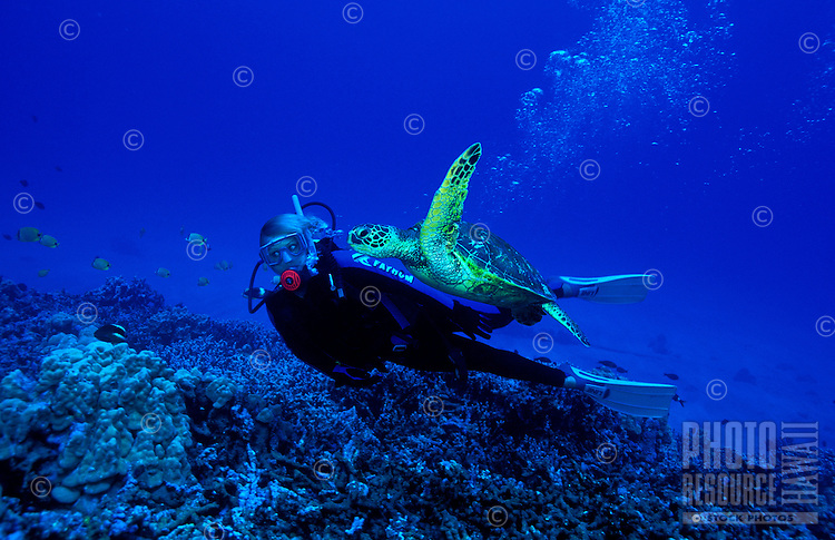A woman scuba diver swims along side a Green Sea Turtle on Hawaii's coral reefs. Hawaiian name for sea turtle is Honu.