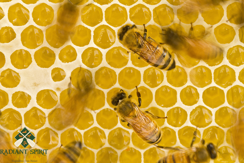 """The Art of Making Honey""<br />