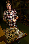 Black-footed Cat (Felis nigripes) biologist, Beryl Wilson, with collected cats, McGregor Museum, Kimberley, South Africa