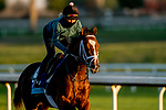 November 4, 2020: Mutasaabeq, trained by trainer Todd A. Pletcher, exercises in preparation for the Breeders' Cup Juvenile Turf at Keeneland Racetrack in Lexington, Kentucky on November 4, 2020. Scott Serio/Eclipse Sportswire/Breeders Cup