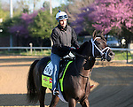 April 23, 2014 Intense Holiday gallops at Churchill Downs with exercise rider Isabelle Bourez.  He is owned by Starlight Racing and trained by Todd Pletcher.