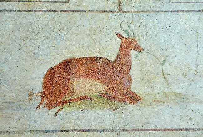 Roman Fresco of a deer from  The Large Columbarium in Villa Doria Panphilj, Rome. A columbarium is usually a type of tomb with walls lined by niches that hold urns containing the ashes of the dead.  Large columbaria were built in Rome between the end of the Republican Era and the Flavio Principality (second half of the first century AD).  Museo Nazionale Romano ( National Roman Museum), Rome, Italy.