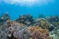Reefscene in Lembeh
