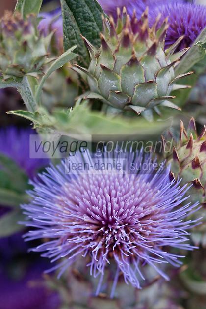 Europe/France/Provence-Alpes-Côte d'Azur/84/Vaucluse/Lubéron/Apt : Fleurs de cardes sur le Marché paysan, Cours Lauze de Perret