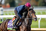 November 5, 2020:Lope Y Fernandez, trained by trainer Aidan P. O'Brien, exercises in preparation for the Breeders' Cup Mile at  at Keeneland Racetrack in Lexington, Kentucky on November 5, 2020. Alex Evers/Eclipse Sportswire/Breeders Cup
