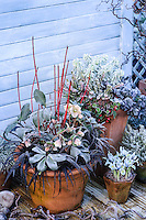 Winter Containers 03