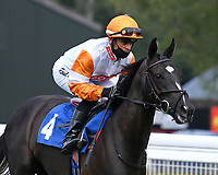 Ness Ta Rah ridden by Raul Da Silva goes down to the start of  The Crouch's Down Maiden Auction Fillies Stakes during Horse Racing at Salisbury Racecourse on 13th August 2020