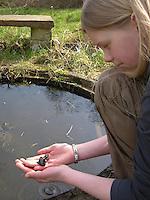 Kinder keschern und tümpeln an einem kleinen Teich im Garten und beobachten Wassertiere, Mädchen, Kind hat einen Molch gefangen, Bergmolch, Alpenmolch, Berg-Molch, Alpen-Molch, Molche in Kinderhand, Ichthyosaura alpestris, Triturus alpestris, alpine newt