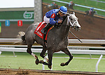 April 10, 2015: Dancing House and jockey Joel Rosario win the 6th race, Allowance Optional Claiming $80,000.   Candice Chavez/ESW/CSM