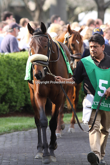 Air Support in the paddock prior to winning The Transylvania (grIII) at Keeneland Race Course. Lexington, KY. 04.08.2011