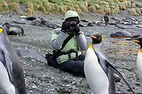 Elyn Stubblefield photographing King Penguin (Aptenodytes patagonicus) on Sandy Beach, Macquarie Island, Australia.
