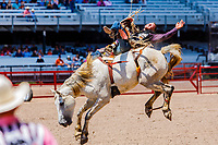 Usa,Wyoming, Cheyenne, bareback riding at the Wrangler milion dollar tour PRCA rodeo  at Frontier days 2017