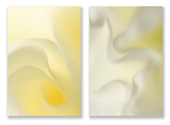 Close-up photographic diptych of white rose and gladiola flowers. Images 152 and 153.
