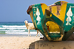 A sheep peeks out from behind a colorfully-painted boat lying on the beach of Yoff, a fishing village 30 minutes outside of Senegal's capital city of Dakar.