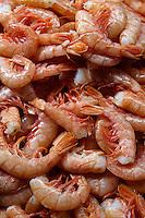 Fresh prawns - Venice Rialto Fish Market