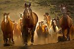 Western horses - mustangs of Colorado