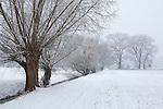 Europa, DEU, Deutschland, Nordrhein Westfalen, NRW, Rheinland, Niederrhein, Krefeld, Baeume, Winter, Schnee, Typische Kopfweide an einem Entwaesserungsgraben, Kategorien und Themen, Natur, Umwelt, Landschaft, Jahreszeiten, Stimmungen, Landschaftsfotografie, Landschaften, Landschaftsphoto, Landschaftsphotographie, Wetter, Wetterelemente, Wetterlage, Wetterkunde, Witterung, Witterungsbedingungen, Wettererscheinungen, Meteorologie, Wettervorhersage<br /> <br /> [Fuer die Nutzung gelten die jeweils gueltigen Allgemeinen Liefer-und Geschaeftsbedingungen. Nutzung nur gegen Verwendungsmeldung und Nachweis. Download der AGB unter http://www.image-box.com oder werden auf Anfrage zugesendet. Freigabe ist vorher erforderlich. Jede Nutzung des Fotos ist honorarpflichtig gemaess derzeit gueltiger MFM Liste - Kontakt, Uwe Schmid-Fotografie, Duisburg, Tel. (+49).2065.677997, <br /> archiv@image-box.com, www.image-box.com]
