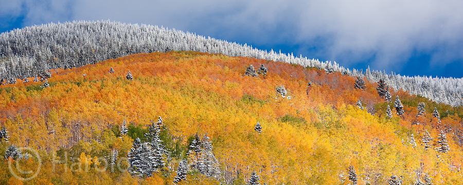 The first snow fall of the year blankets the pine and aspen trees in the Santa Fe National Forest near Hyde Memorial State Park heading to the Santa Fe Ski basin.