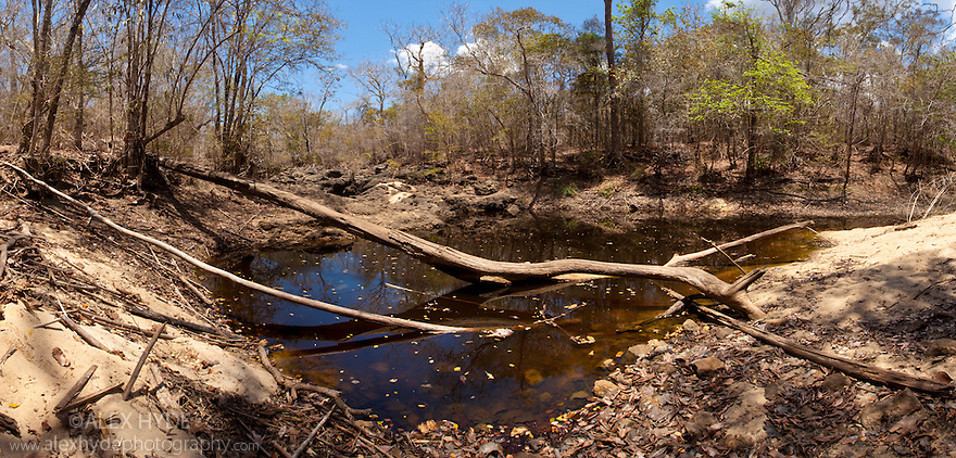 Shrinking waterhole in dry riverbed, dry deciduous forest, Kirindy Forest. Western Madagascar. (Stitched Panorama) October.