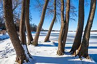 Winter am Glindower See, Glindow, Werder, Havelland, Potsdam-Mittelmark, Brandenburg, Deutschland