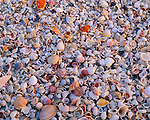 Sanibel Island, FL  <br /> A close up of the many shapes, sizes, and colors of shells on Bowmans Beach