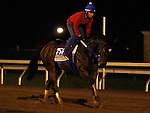 October 25, 2015:  Nickname, trained by Steven Asmussen, and owned by LNJ Foxwoods, is entered in the Breeder's Cup 14 Hands Winery Juvenile Fillies. Candice Chavez/ESW/CSM