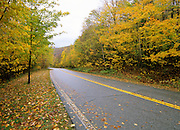 Autumn / Fall Colors along a road in the White Mountain National Forest located in the state of New Hampshire, USA, Which is located in New England