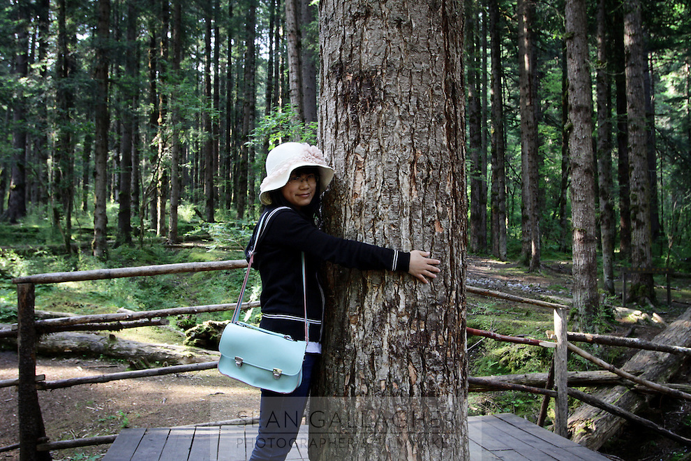 A tourist hugs a tree in the Jiuzhaigou National Park. Sichuan Province. China