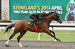 April 03, 2014: Hip 17 Tapit - My White Corvette consigned by Eddie Woods worked 1/8 in 10:2.  Candice Chavez/ESW/CSM