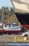 Port Townsend, Port of Port Townsend, Boat Haven Marina, fishing boats, salmon seiner, Brookfield, Jefferson County, Olympic Peninsula, Washington State, Pacific Northwest, USA,