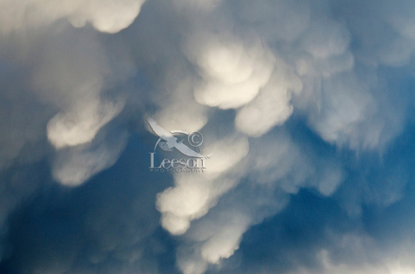 Mammatus clouds part of  thunderstorm clouds over Yellowstone River Valley in southern Montana.  May.