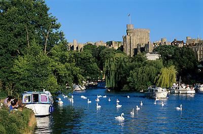 Grossbritannien, England, Berkshire, Windsor: Schloss Windsor an der Themse | Great Britain, England, Berkshire, Windsor: boats and swans on River Thames with Windsor Castle